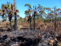 Scorched Trees and plants